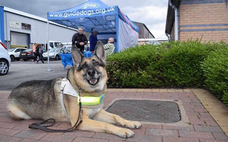 Guide dog at My Pets Vet Ltd Leigh