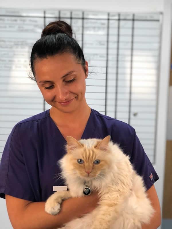 Vet nurse and cat at My Pets Vet Ltd Leigh