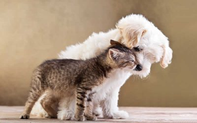 Puppy and Kitten Packs