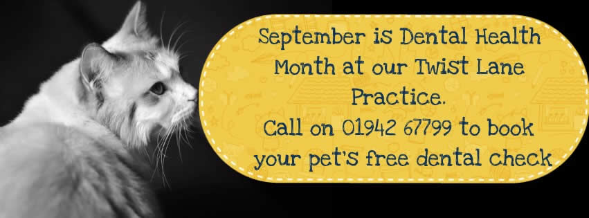 Dental Month at My Pets Vet Ltd Leigh