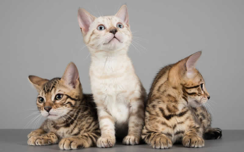 My Pets Vet Leigh 3 kittens