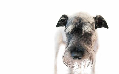 Vomiting outbreak in dogs