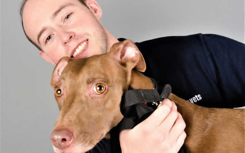 Vet and dog at My Pets Vet Ltd Leigh