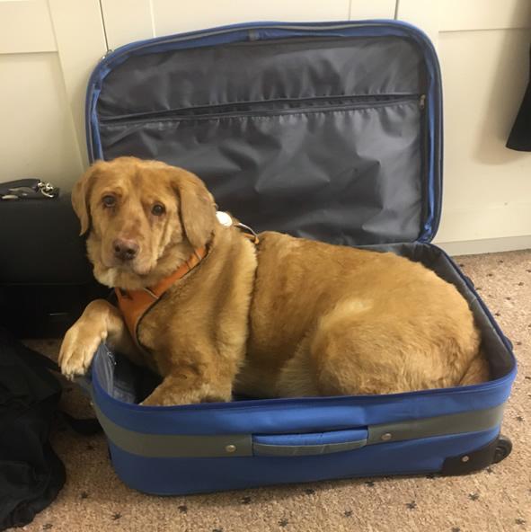 Rescue dog Bruno