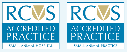 We are proud to be a small animal RCVS accredited Practice and Hospital